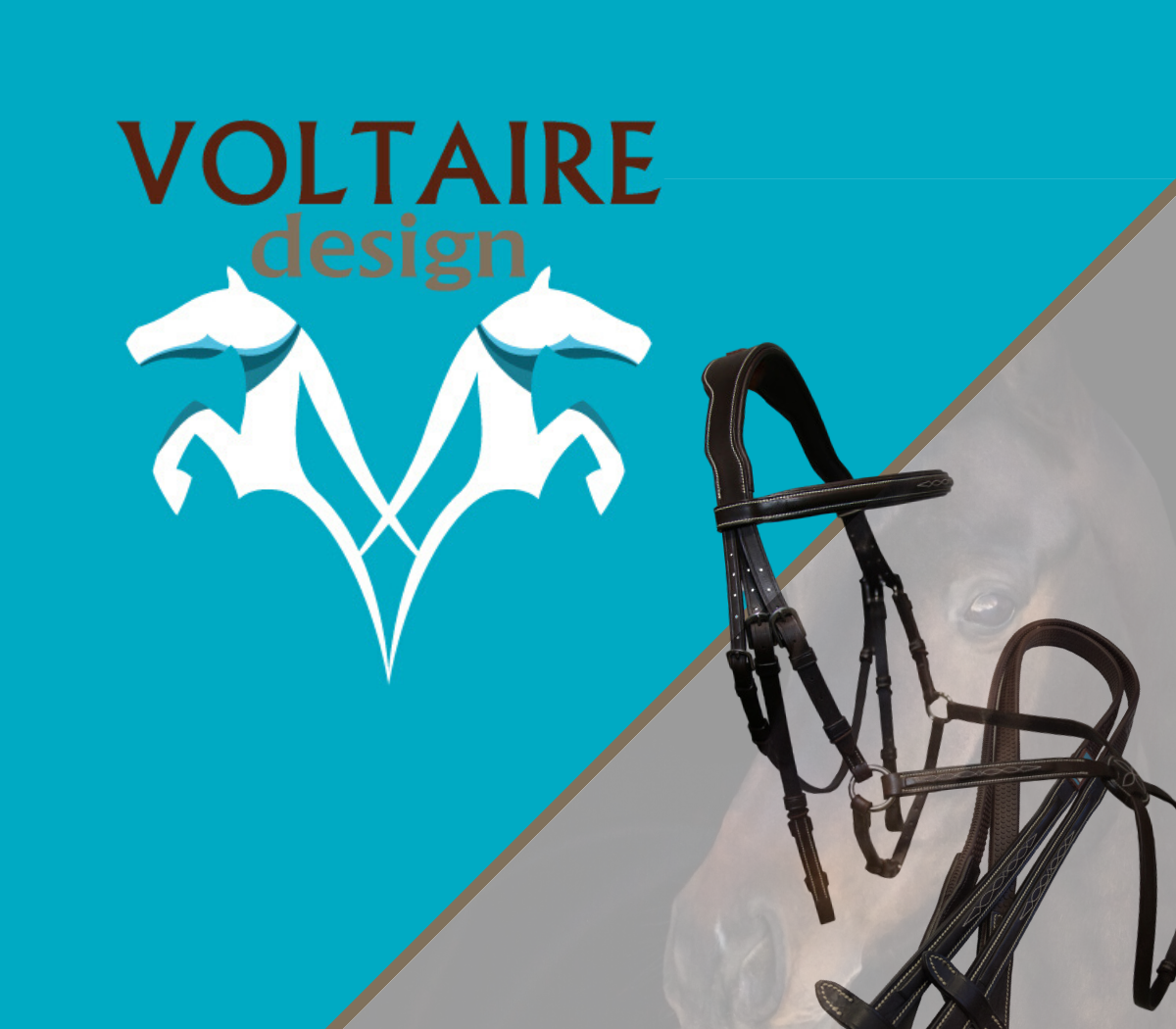 Copy of Voltaire for webpage (4)